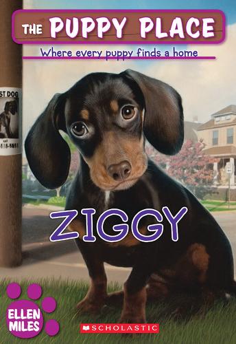 021-ziggy-ellen-miles-the-puppy-place-books-series-number-21-9780545253956